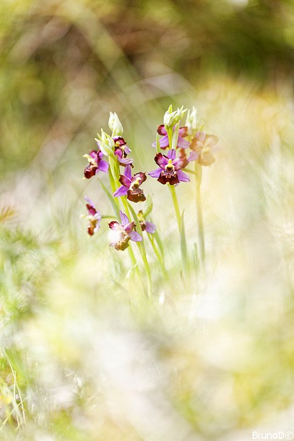 20210509_Orchidées_Rochefort_4221_DxO-BorderMaker