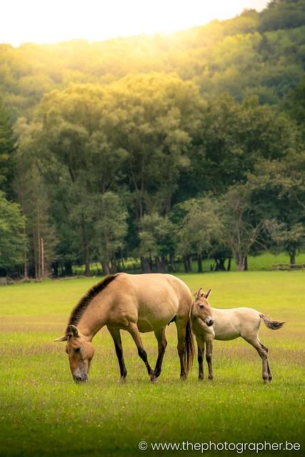 Een paard en veulen op de wei