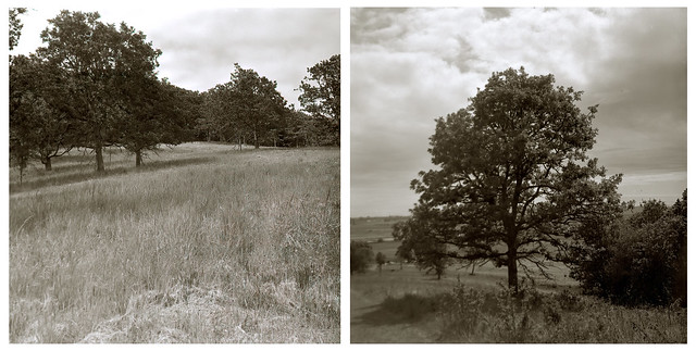 Tree-Hill Diptych