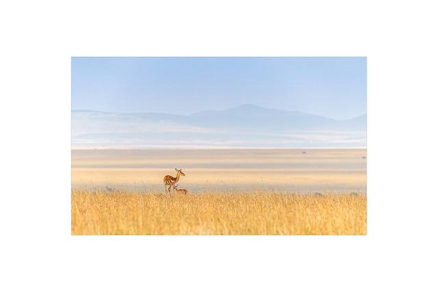 Impala & Baby in Savanna