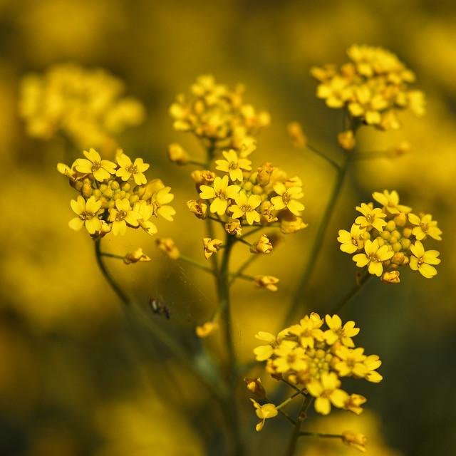 Depth Of Yellow
