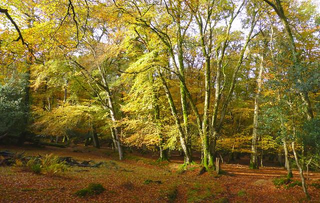 New Forest National Park, Hampshire, UK