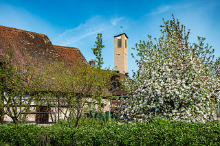 The Dechsendorfer church tower nestled between the barn and apple tree - 3078