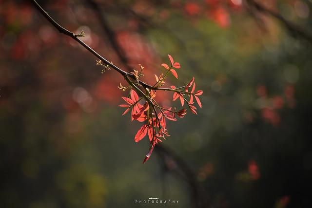 New leaves growingup