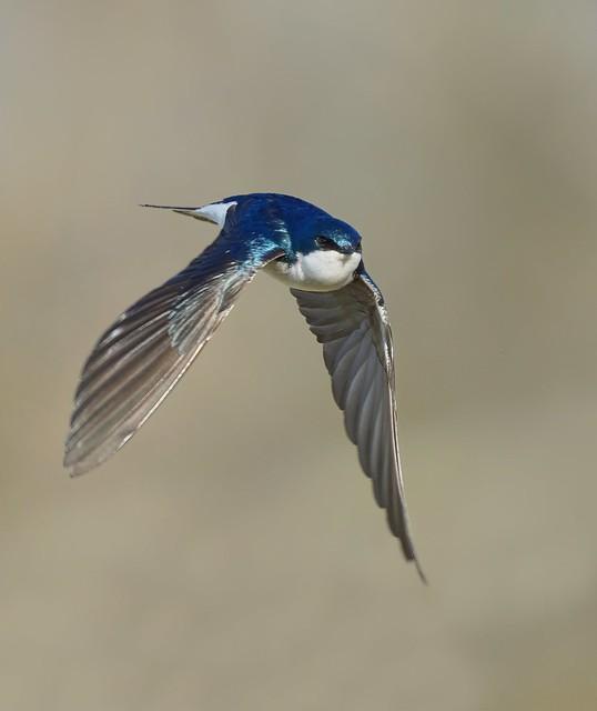Adorable Swallow...