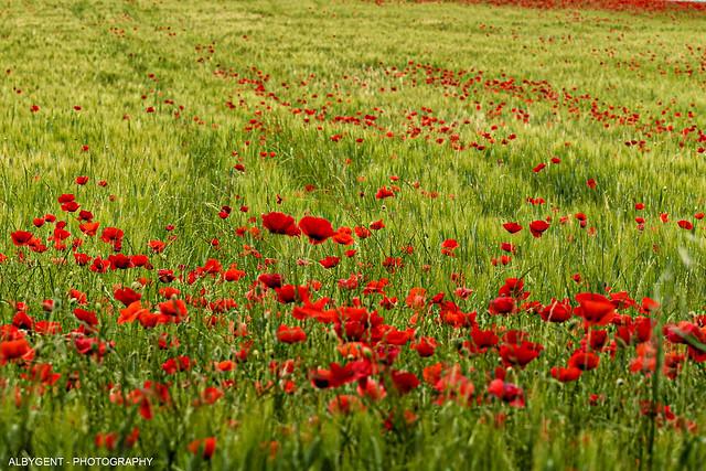 il rosso e il verde - red and green