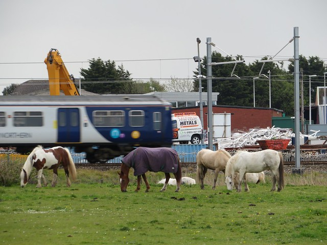 Northern Rail. Faster than a grazing horse...