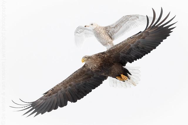 Biplane Eaglecraft