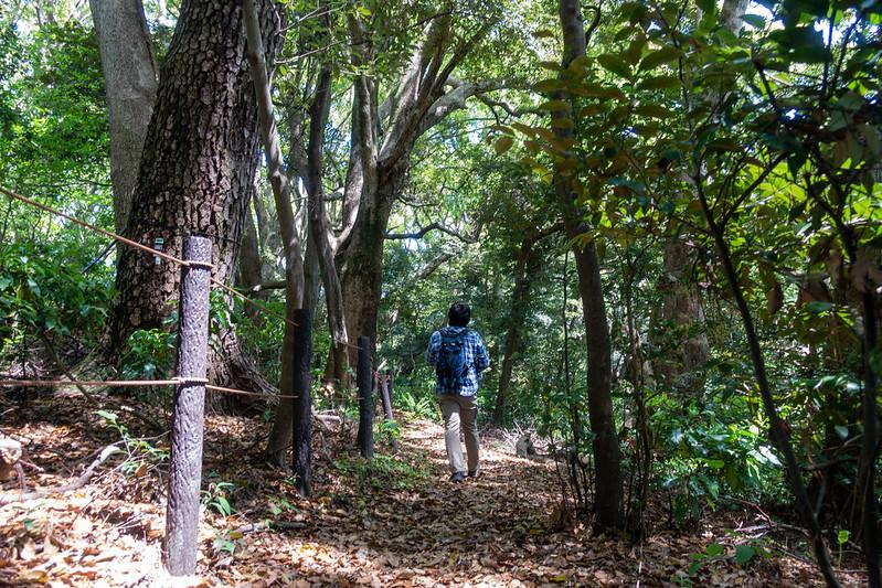 真鶴 森林浴遊歩道