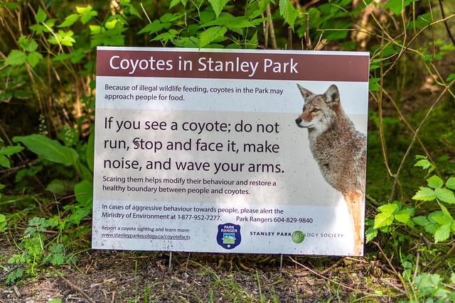 Stanley Park Coyotes (_K115398)