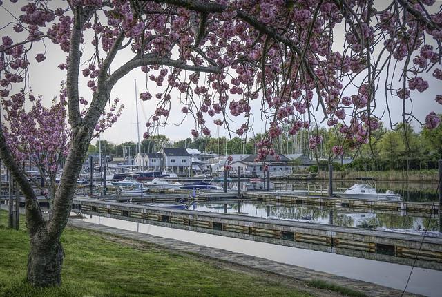 Harbor Spring