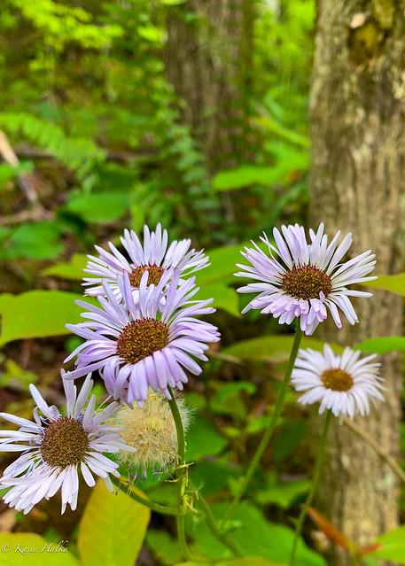 Wildflowers-0657