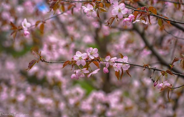 Blooming May... / Цветущий май...