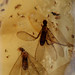 Enclosed invertebrates