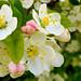 Macro Flower_00300