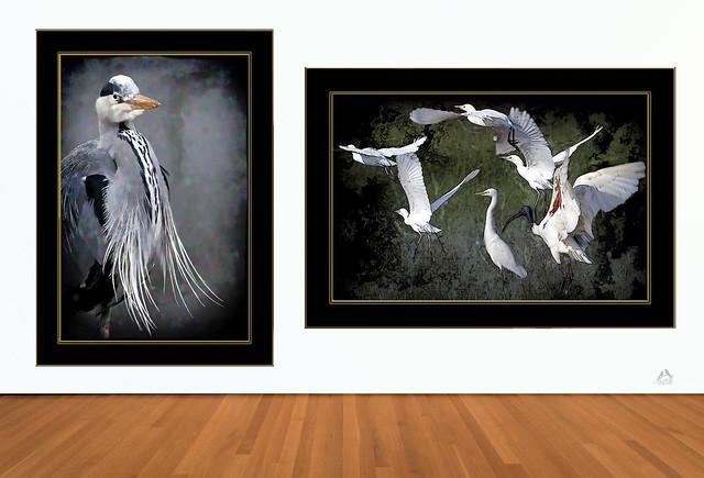 Grey Heron,  Egrets and Black-headed Ibis