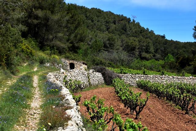 Vinyes i caseta, el Pago, pedra seca, Subirats