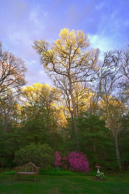 Sunset on the Treetops