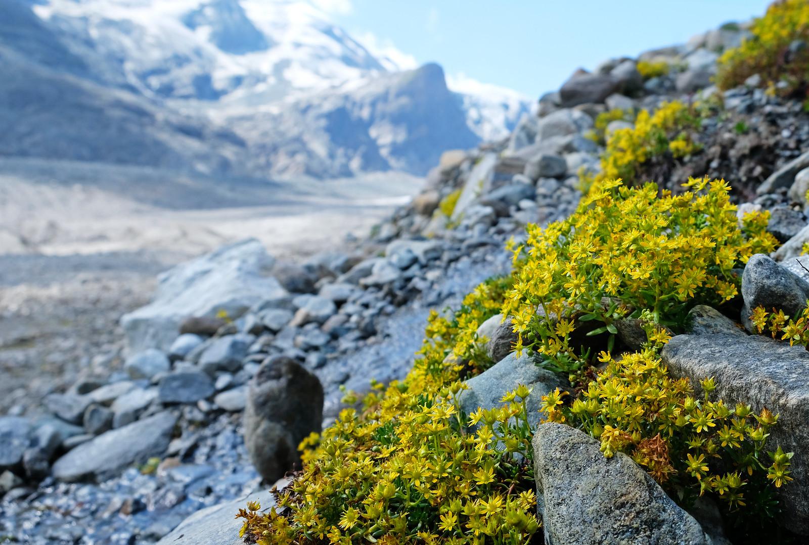 Pasterze Glacier Trail, Alps, Austria