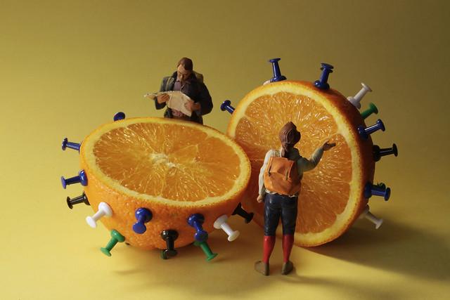 enigma : fruit or virus ?