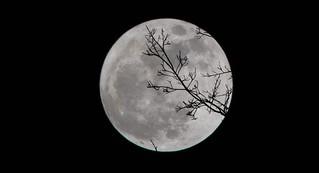 Il 26 maggio il cielo ci regala la Superluna più grande dell'anno