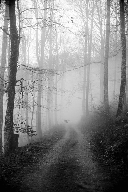 A return to the silent forest