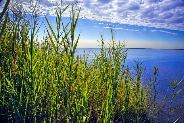 Tidewater Grass