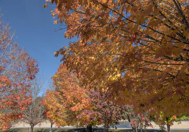 Georgia in the Autumn