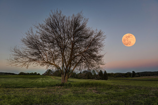 Early Spring Moon