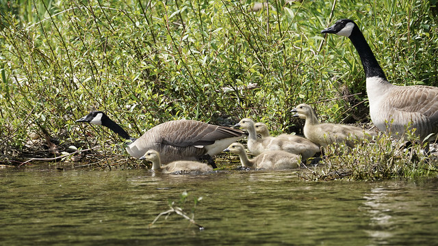 On the Clackamas River-