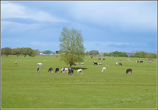 Beverley Pastures ...