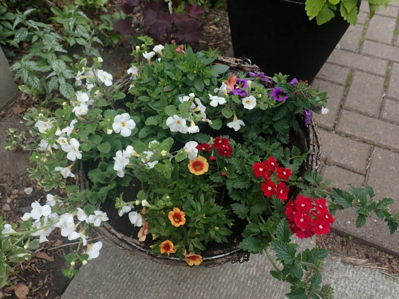 Pots et jardinières 2021 51174374702_38b9afa622_c