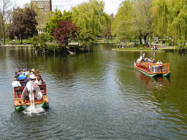 Swan boats in the Public Gardens