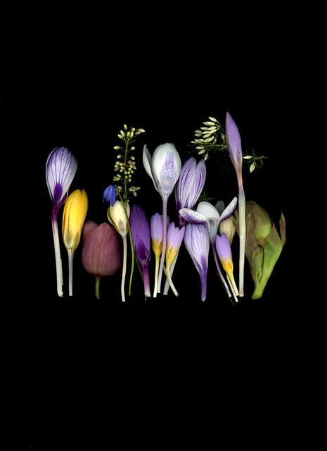 61163.01 Crocus, Helleborus, Scilla, Calluna vulgaris