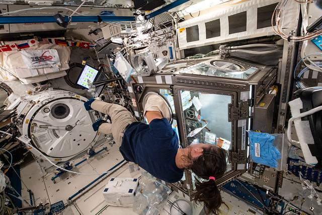 Astronaut Megan McArthur services cells for the Celestial Immunity study