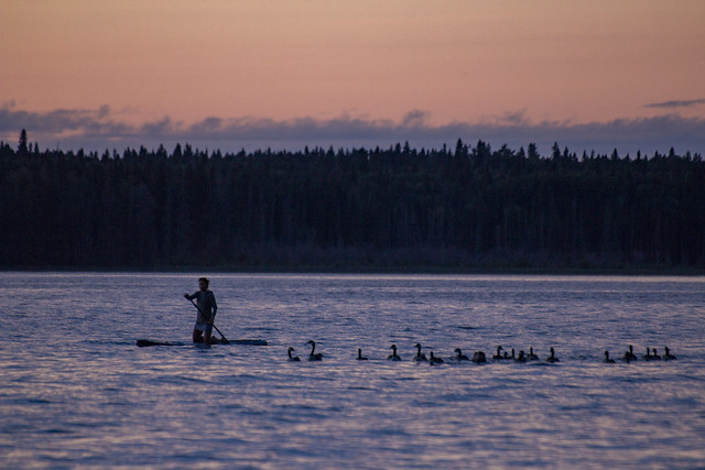 Standing board and Canada Geese at sunset, Waskesiu Lake, Prince Albert National Park