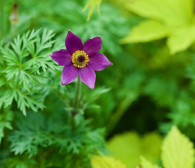 A purple star