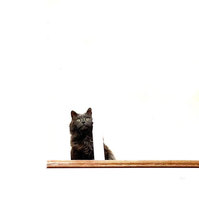 Kitty perch.