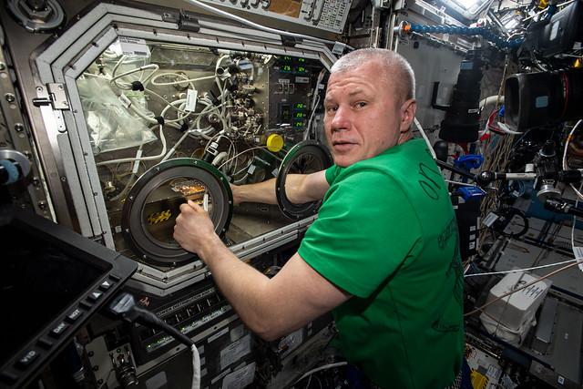 Flight Engineer Oleg Novitskiy swaps hardware for a physics investigation