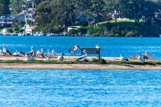 Protected Pelican Breeding Area