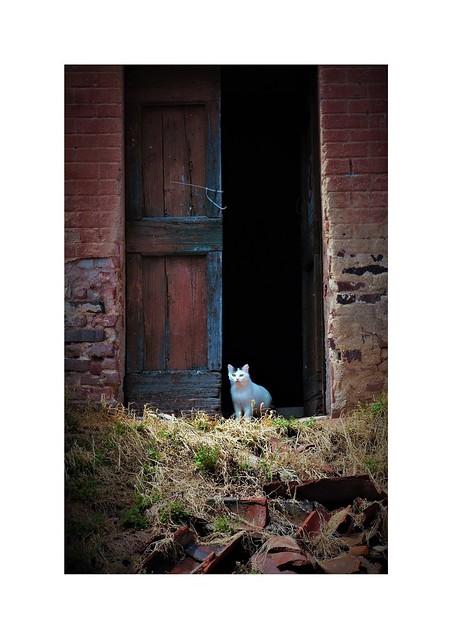 Una timida presenza 😺