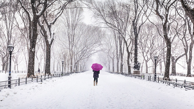 Lady with Pink Umbrella, The Mall, Central Park, New York City, New York, America