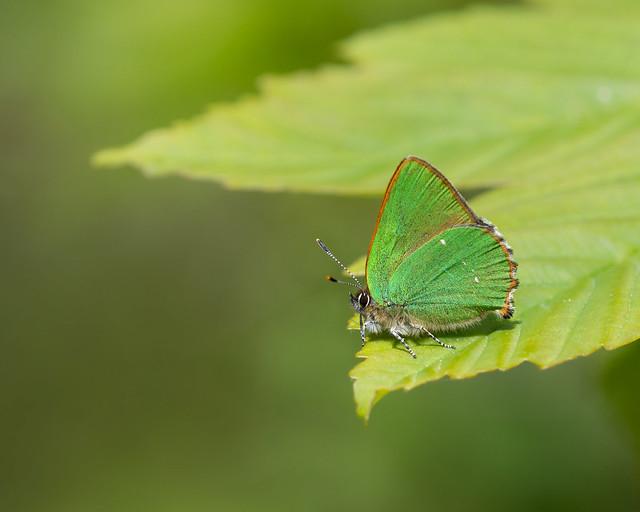 dazzling emerald