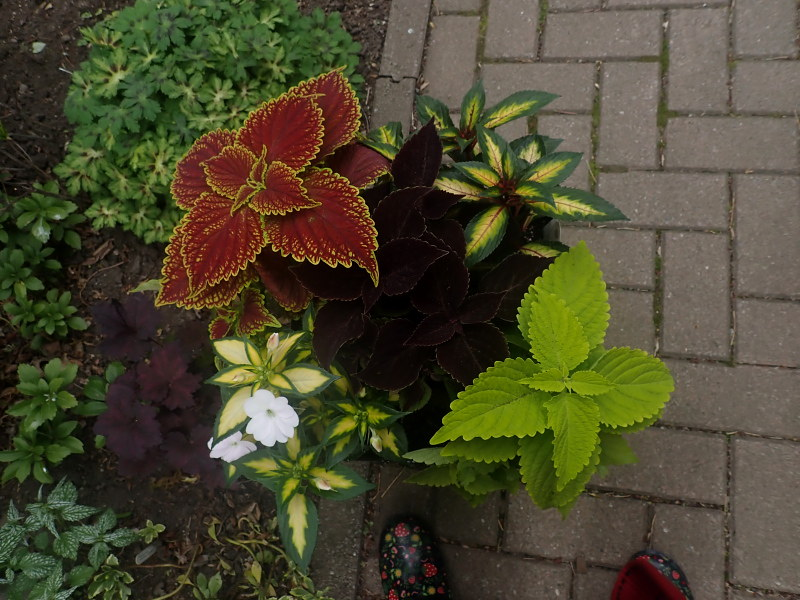 Pots et jardinières 2021 51175050246_9752c71da6_c