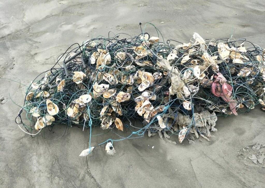 廢蚵繩未處理前之原貌。照片提供海保署
