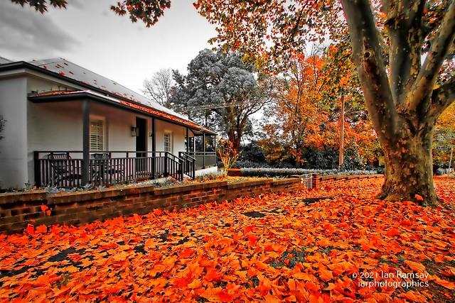 Autumn's leafy carpet.