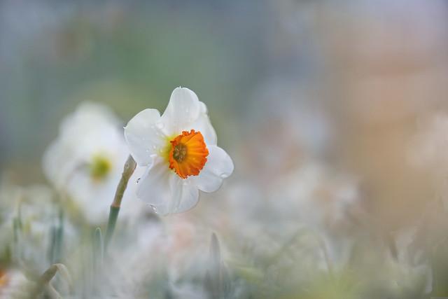 Freshness of Spring