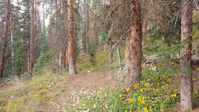 Segment 15, Colorado Trail, CO (4)