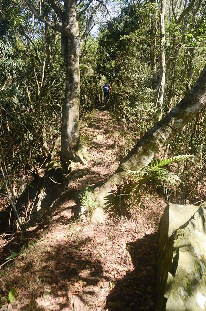 塔羅留山稜線山徑 (2)