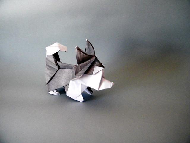 Husky - Sébastien Limet